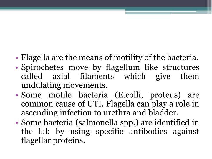Flagella are the means of motility of the bacteria.