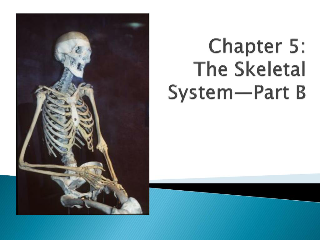PPT - Chapter 5: The Skeletal System—Part B PowerPoint Presentation ...