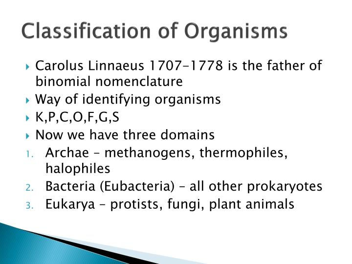 classification of organisms n.