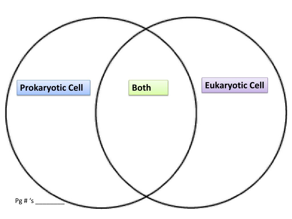 Ppt Prokaryotic Cell Powerpoint Presentation Id2282578 Functional Anatomy Of And Eukaryotic Cells