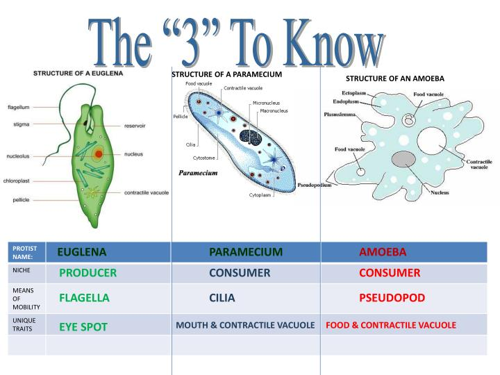 "The ""3"" To Know"