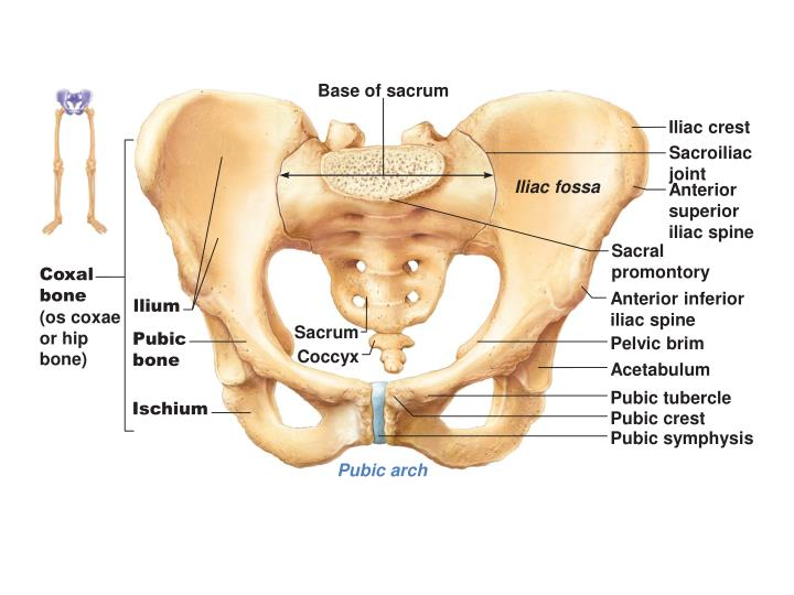 Base of sacrum