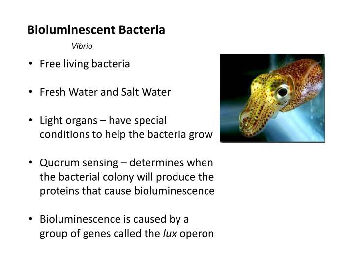 Bioluminescent Bacteria