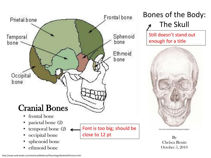 PPT - Bones of the Body: The Skull PowerPoint Presentation - ID:2282855