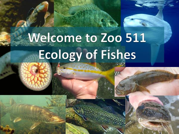 welcome to zoo 511 ecology of fishes n.