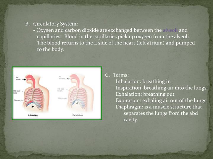 Circulatory System: