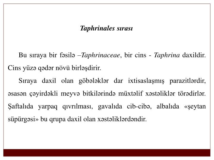 Taphrinales