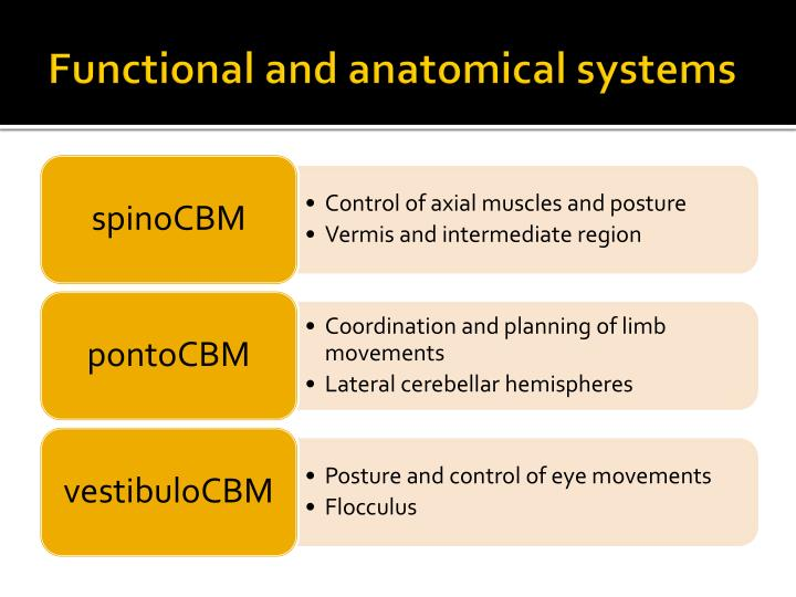 Functional and anatomical systems