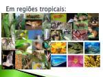 em regi es tropicais