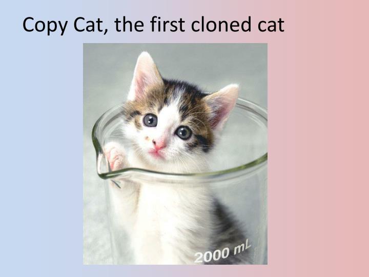 Copy Cat, the first cloned cat