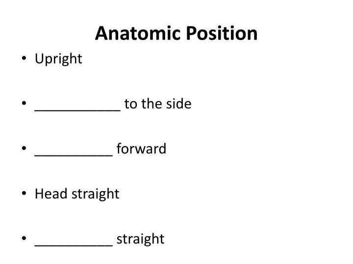 Anatomic position