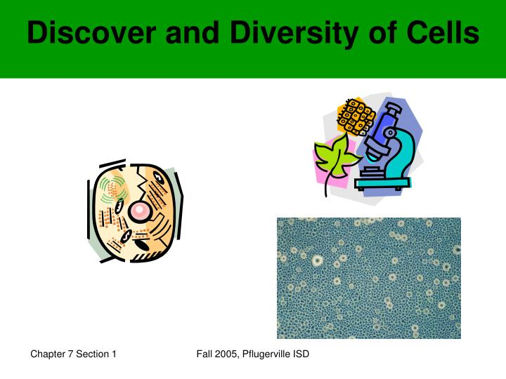 discover and diversity of cells n.