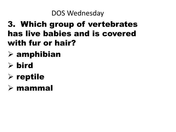 DOS Wednesday