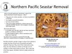 northern pacific seastar removal