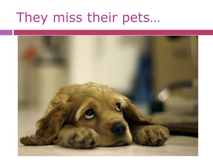 They miss their pets…
