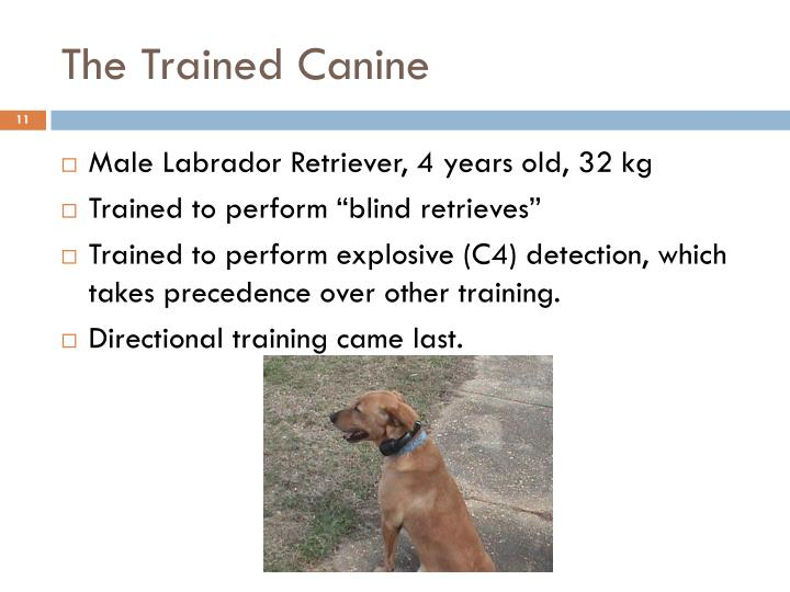 The Trained Canine