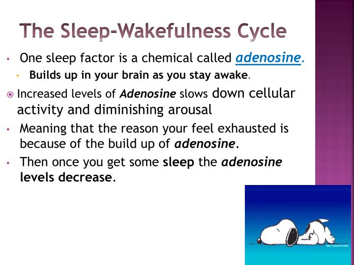 ________ neurons play a key role in cerebral activation during alert wakefulness.