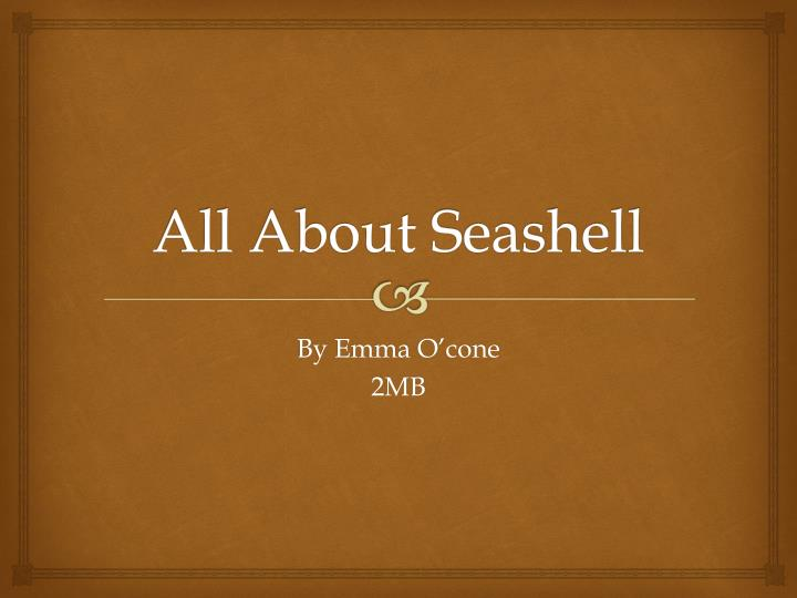 all about seashell n.