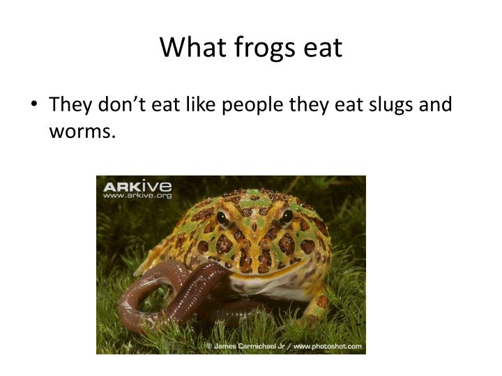 What frogs eat