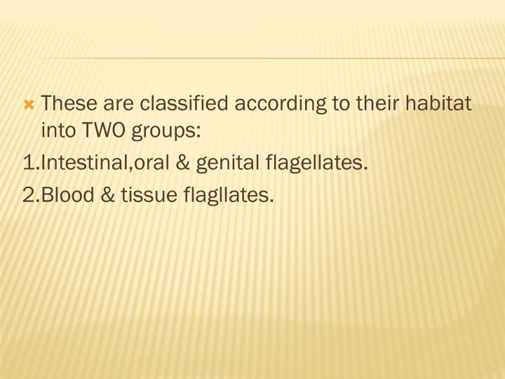 These are classified according to their habitat into TWO groups: