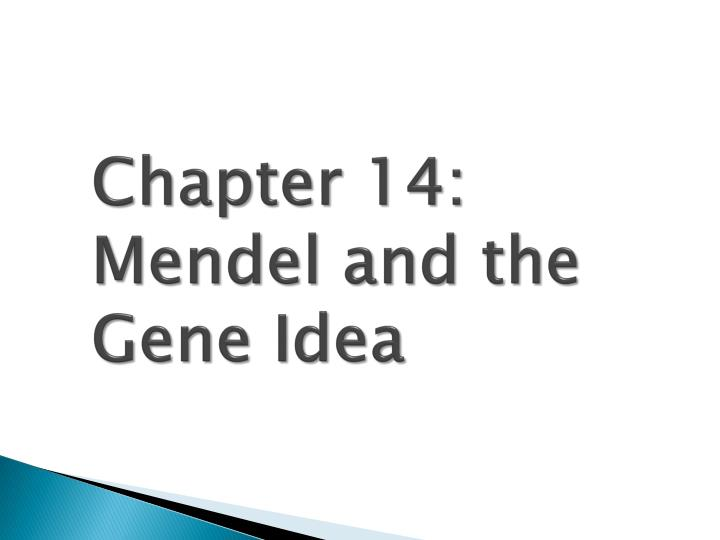 chapter 14 mendel and the gene idea n.
