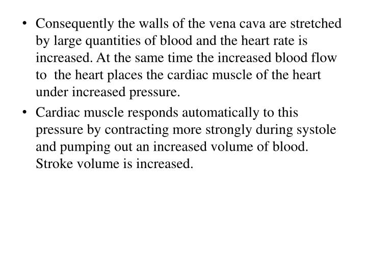 Consequently the walls of the vena cava are stretched by large quantities of blood and the heart rate is increased. At the same time the increased blood flow to  the heart places the cardiac muscle of the heart under increased pressure.