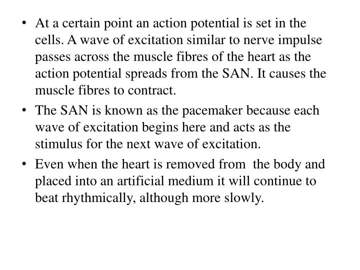 At a certain point an action potential is set in the cells. A wave of excitation similar to nerve impulse passes across the muscle