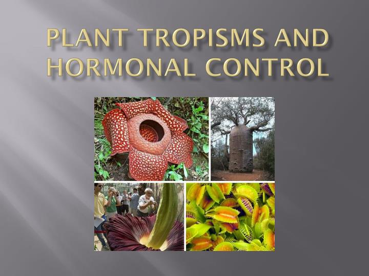 plant tropisms and hormonal control n.