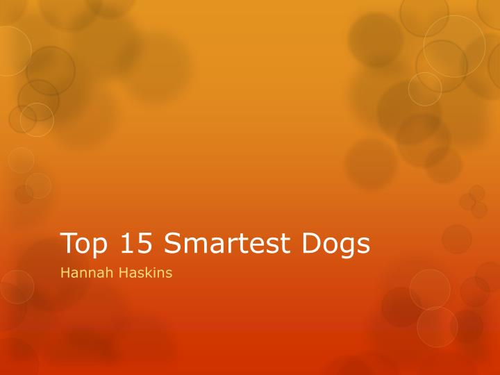 top 15 smartest dogs n.