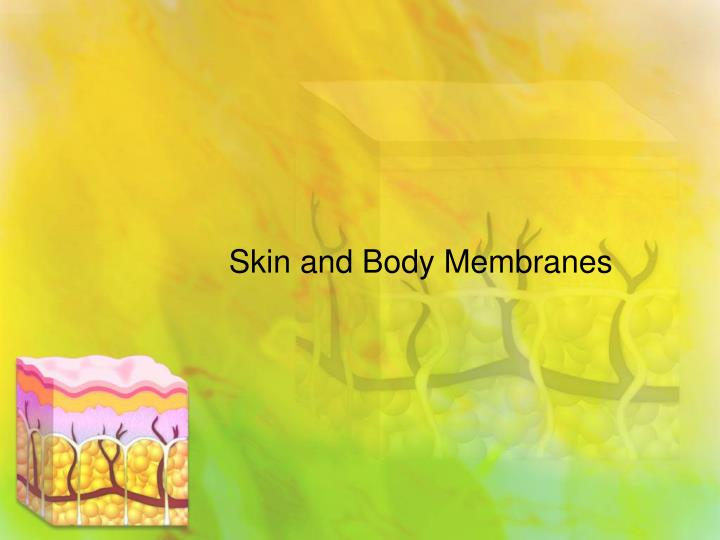 skin and body membranes n.