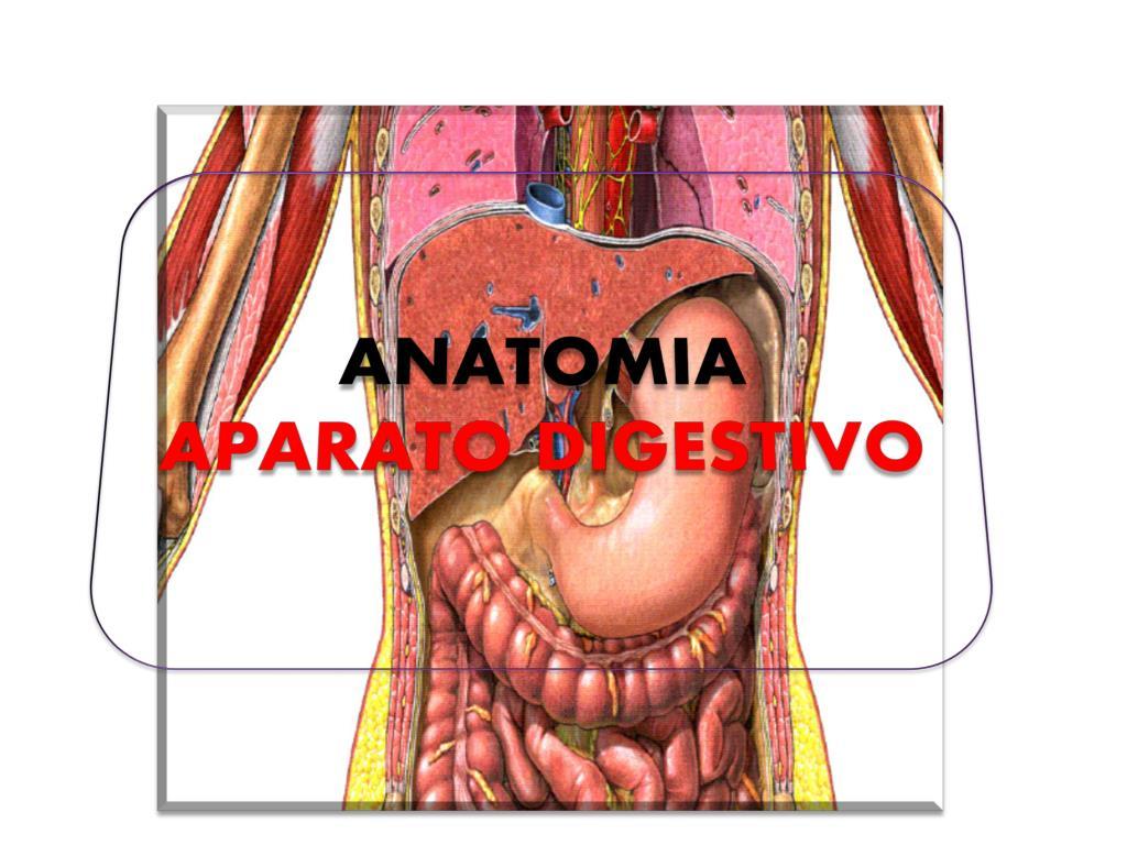PPT - ANATOMIA APARATO DIGESTIVO PowerPoint Presentation - ID:2292366