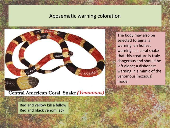 Aposematic warning coloration