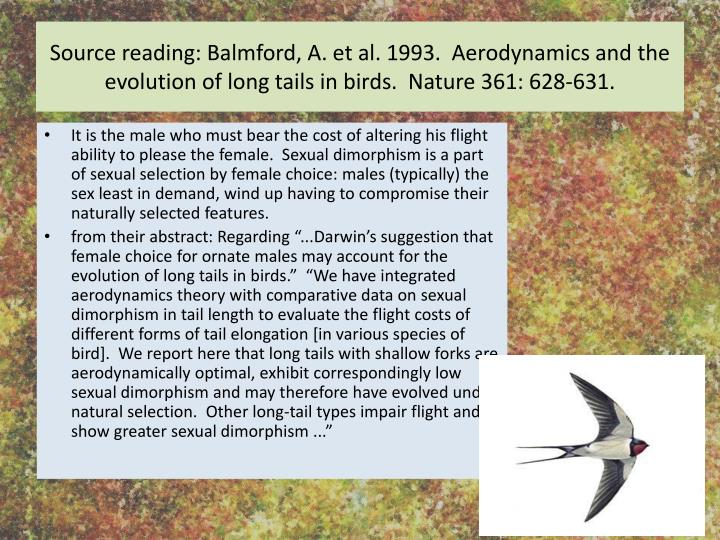 Source reading: Balmford, A. et al. 1993.  Aerodynamics and the evolution of long tails in birds.  Nature 361: 628-631.