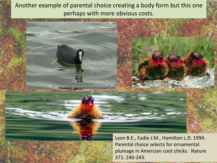 Another example of parental choice creating a body form but this one perhaps with more obvious costs.
