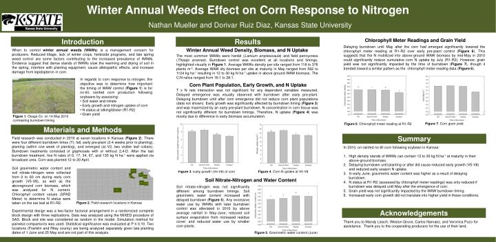 Winter annual weeds effect on corn response to nitrogen