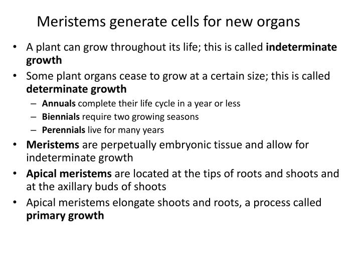 Meristems generate cells for new organs