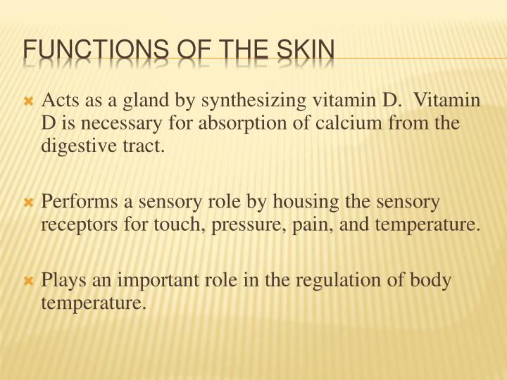 Acts as a gland by synthesizing vitamin D.  Vitamin D is necessary for absorption of calcium from the digestive tract.