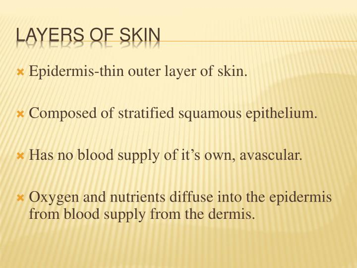 Epidermis-thin outer layer of skin.