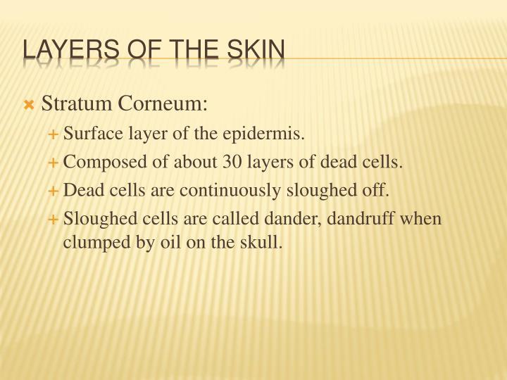 Stratum Corneum: