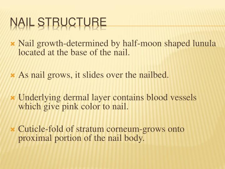 Nail growth-determined by half-moon shaped lunula located at the base of the nail.