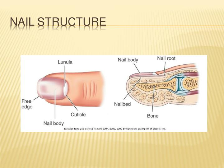 Nail structure