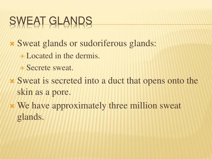 Sweat glands or sudoriferous glands: