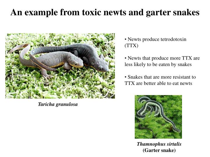An example from toxic newts and garter snakes