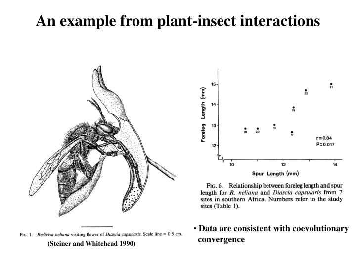 An example from plant-insect interactions