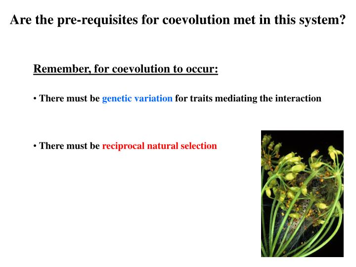 Are the pre-requisites for coevolution met in this system?