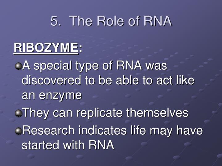 5.  The Role of RNA