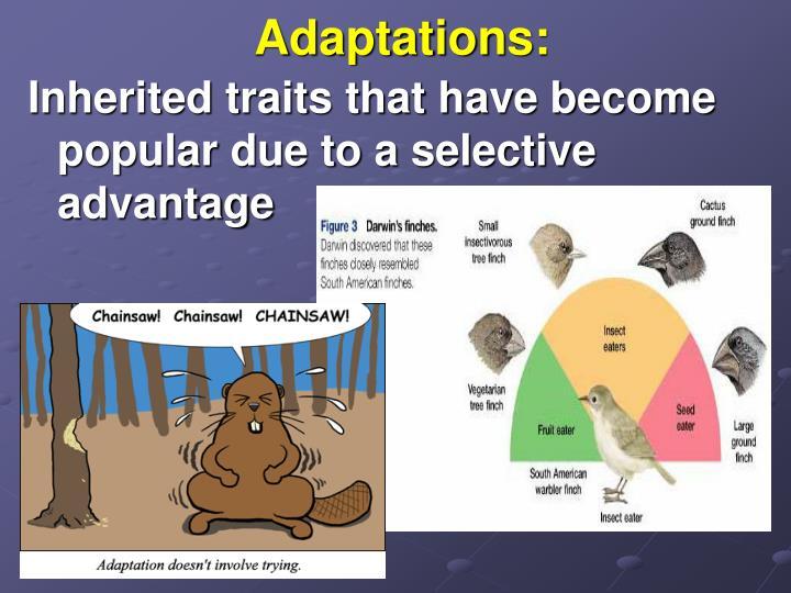 Adaptations: