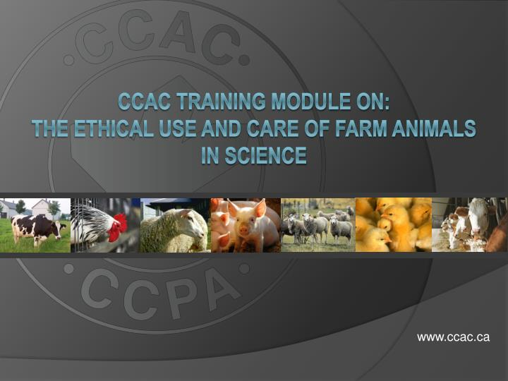 ccac training module on the ethical use and care of farm animals in science n.