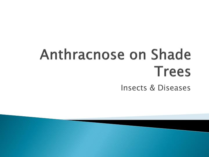 anthracnose on shade trees n.