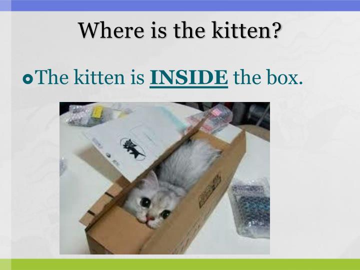 Where is the kitten